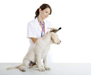 犬のステロイド使用