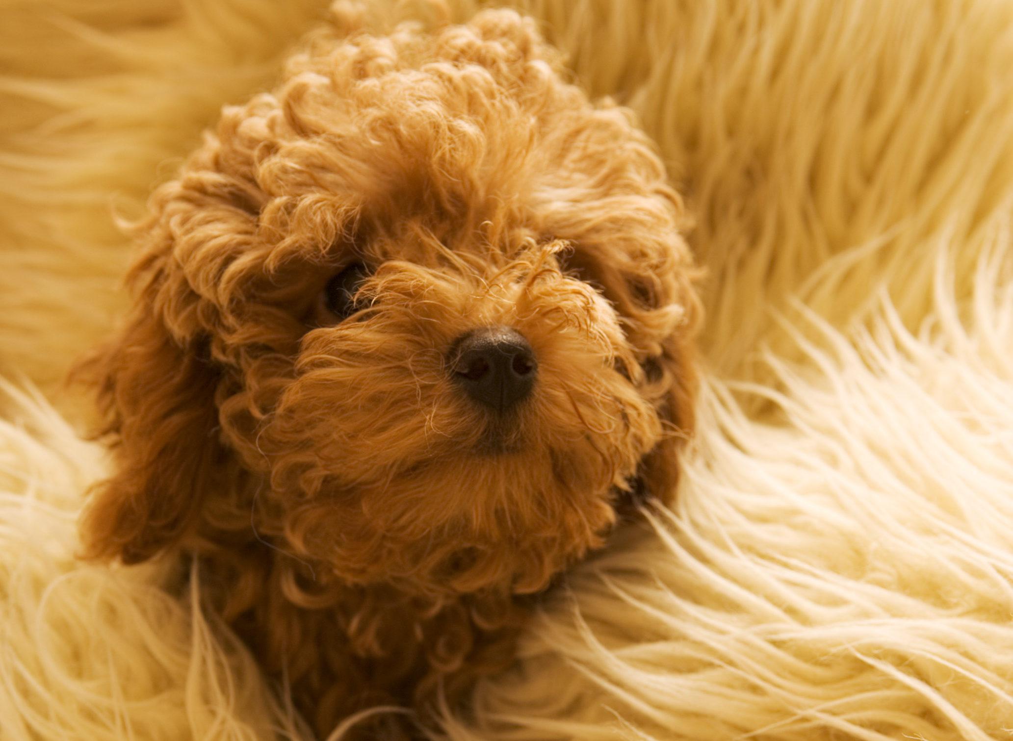 犬のイボの注意点やケアまとめ!高齢犬にできやすいイボ対策
