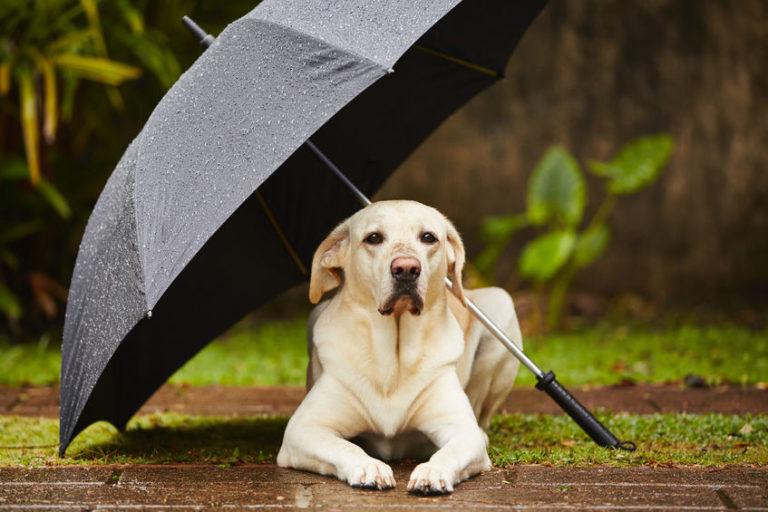 雨の日の犬の散歩