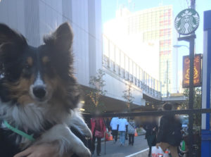 犬と一緒にスタバへ行こう!犬OKなスターバックス@新宿新南口店