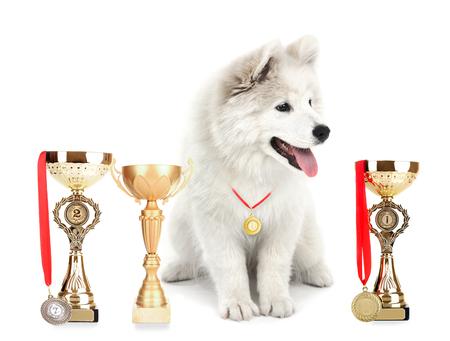 ギネスブックに認定された犬