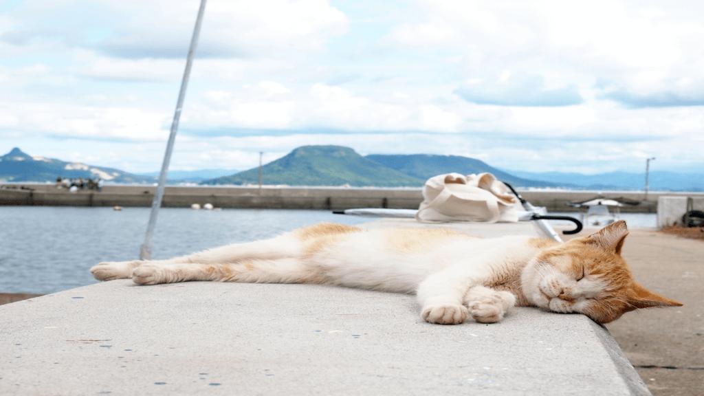 港で眠る三毛猫