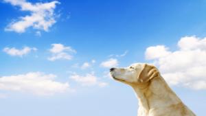 晴天の夏空と犬