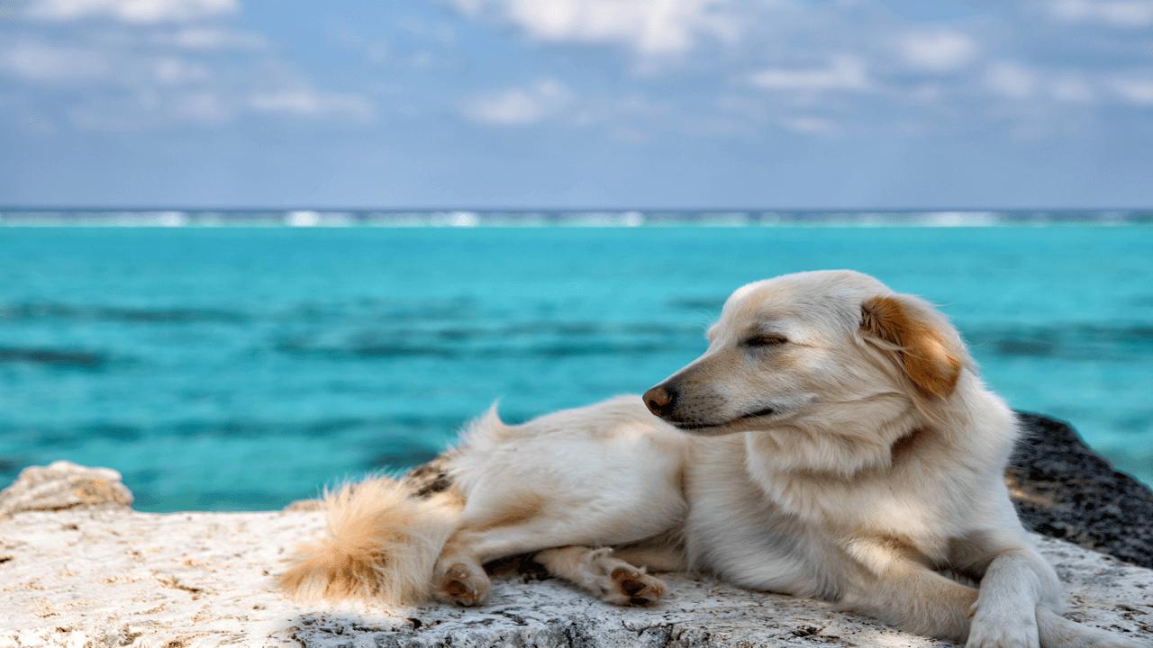 海を背景にリラックスする犬