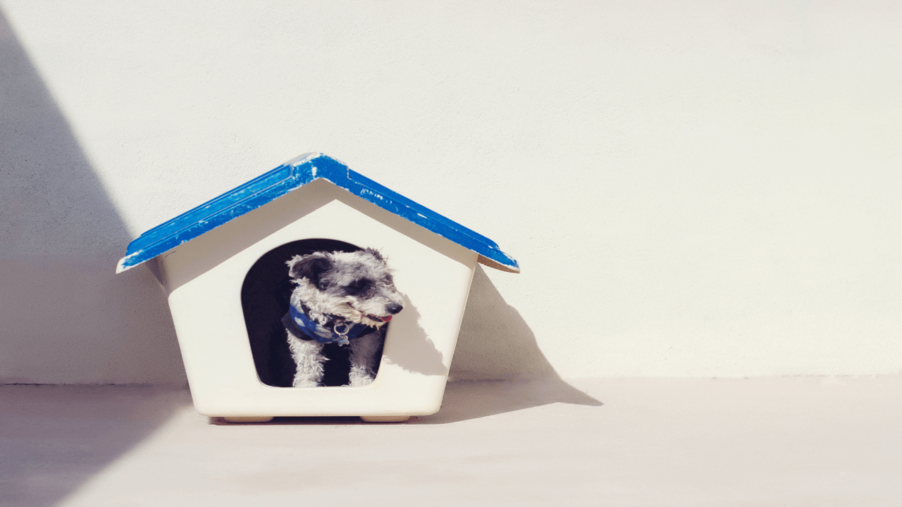 犬小屋に入り外を眺める犬