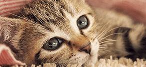 ペットの皮膚トラブル諸症状