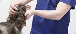 ペットの肌トラブル対策