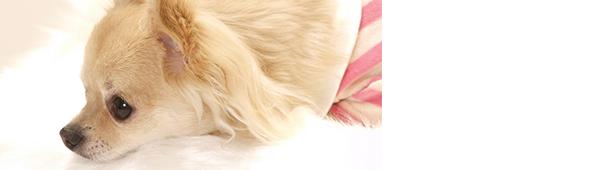 ペットの皮膚トラブル全般