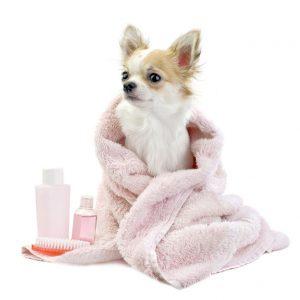 ドライヤーが苦手な犬には大判のタオルを用意