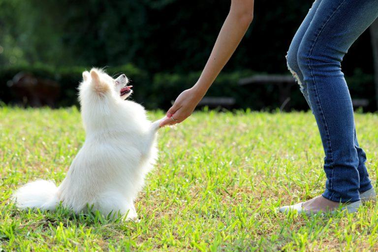 唸る犬の対処法