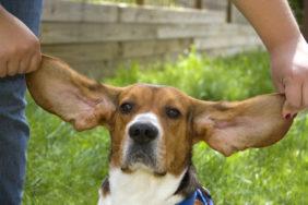 長引く外耳炎