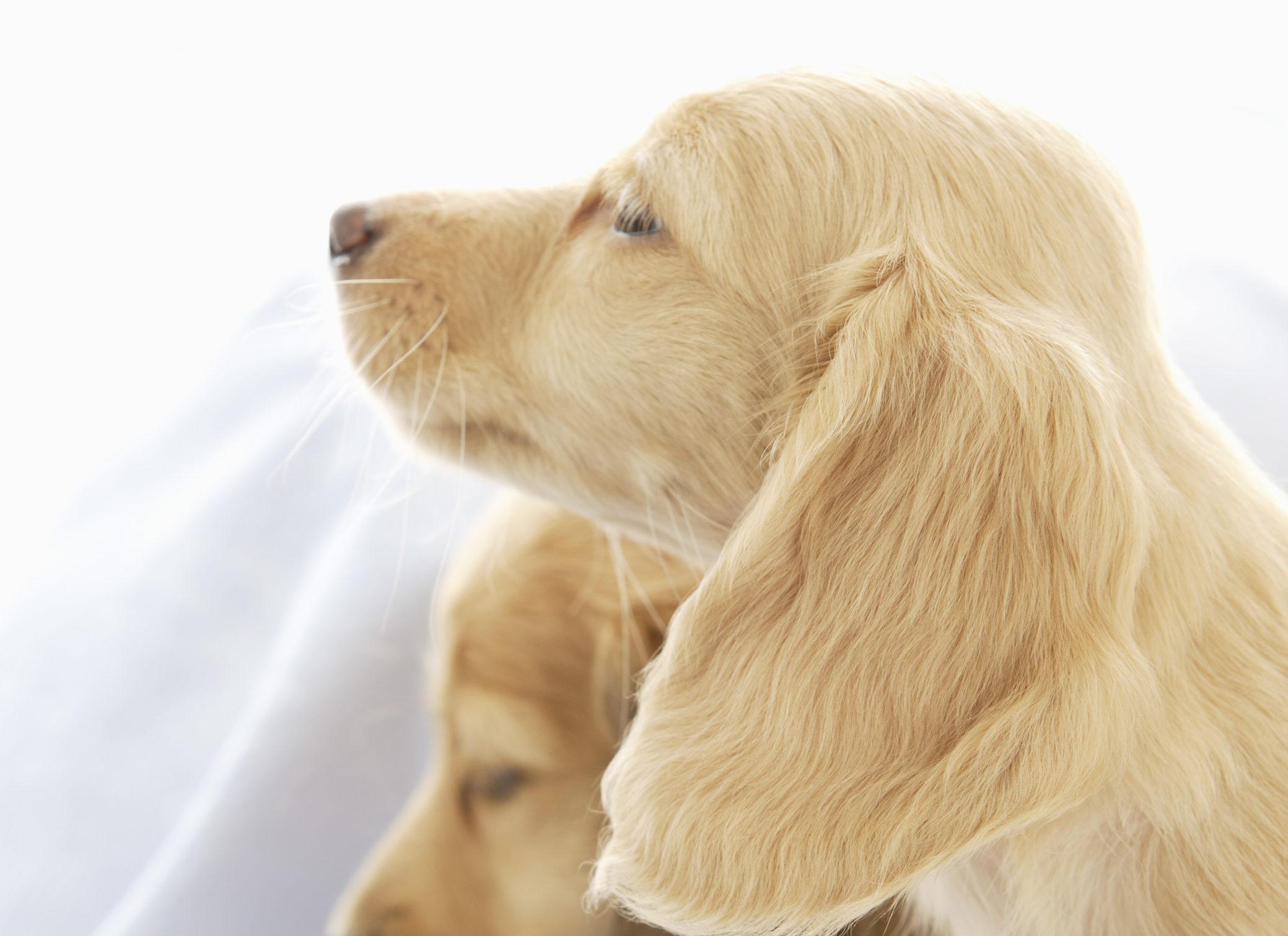犬の乾燥肌・皮膚トラブルの対策法とオススメの保湿剤