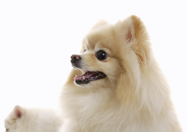 長毛種の犬の抜け毛対策