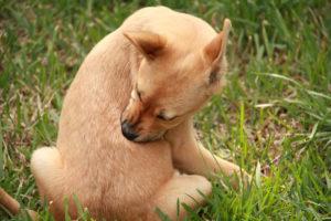 除草剤と犬のサンポ