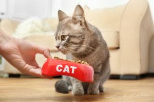 猫の食欲不振